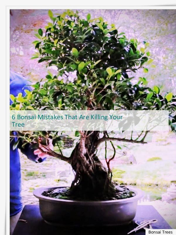 Great Bonsai Training And Shaping Bonsais Pinterest Bonsai