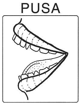 Části těla - pusa