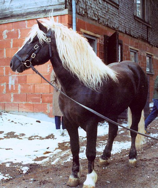 1005 best images about HORSE BREEDS on Pinterest | Arabian ...