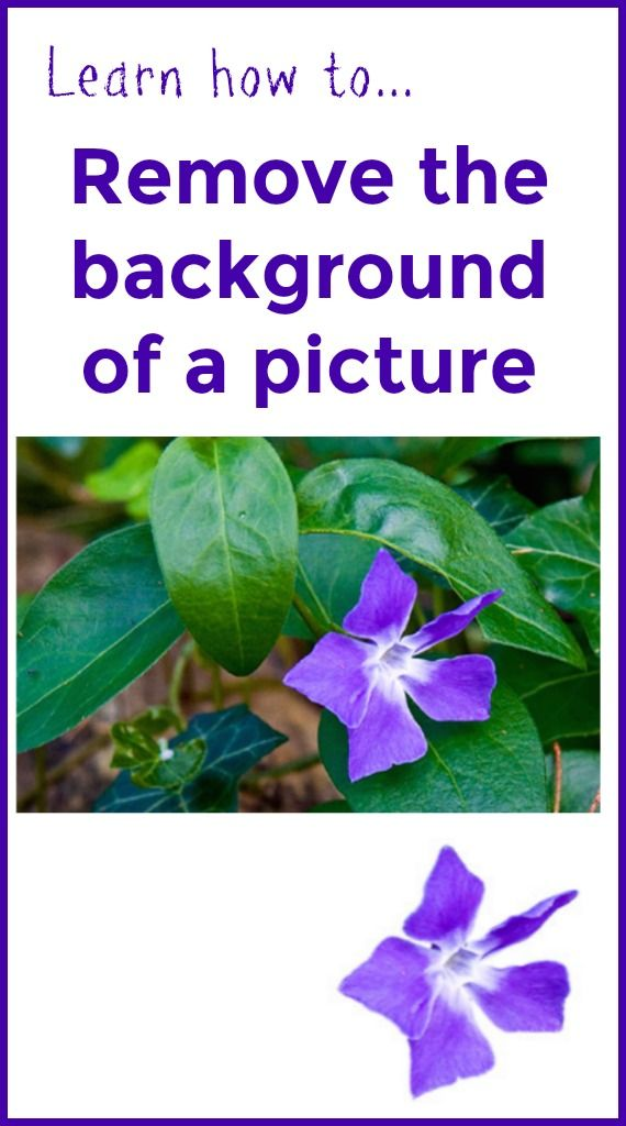 Find out how to remove the background of a picture to decrease visual clutter and complexity for individuals with CVI and other types of visual impairment.