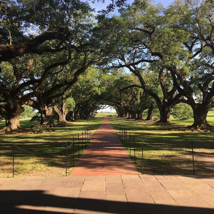 We are the most visited historic plantation on Louisiana's River Road. But often times if you arrive at 9 AM you can get photos of the alley of oaks like this one! #OakAlley