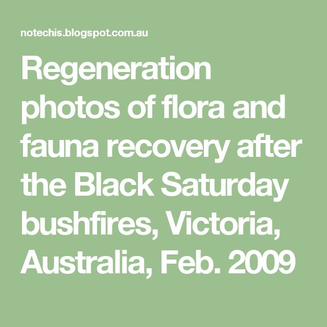 Regeneration photos of flora and fauna recovery after the Black Saturday bushfires, Victoria, Australia, Feb. 2009