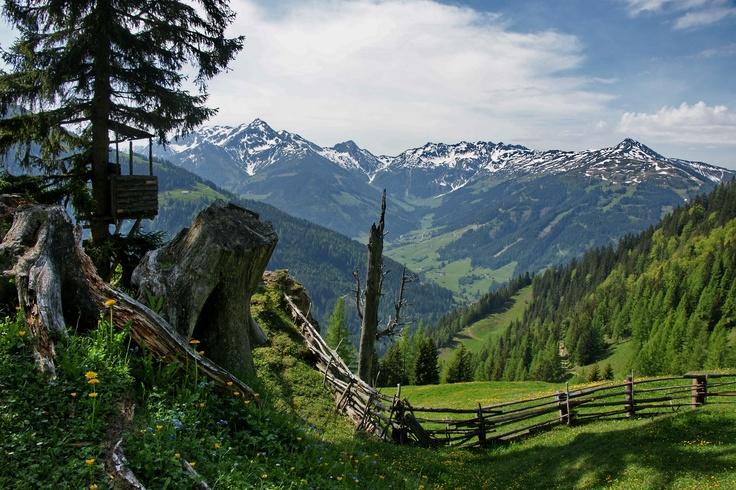 hiking in Wildschönau/Tyrol