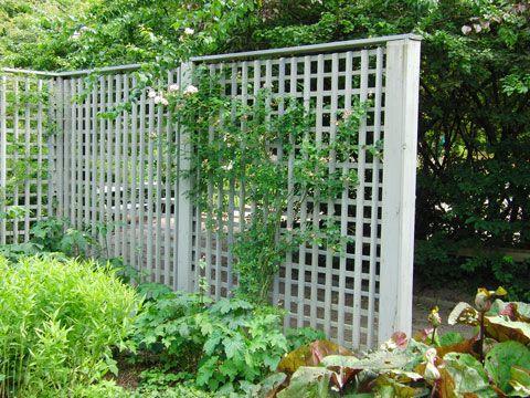 Liselottes trädgård - Bloggar