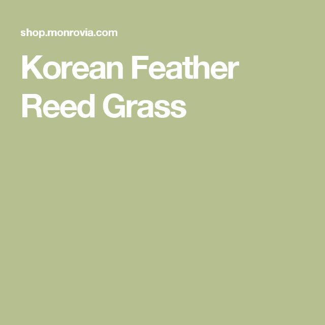 korean feather reed grass - Hinterhoflandschaften