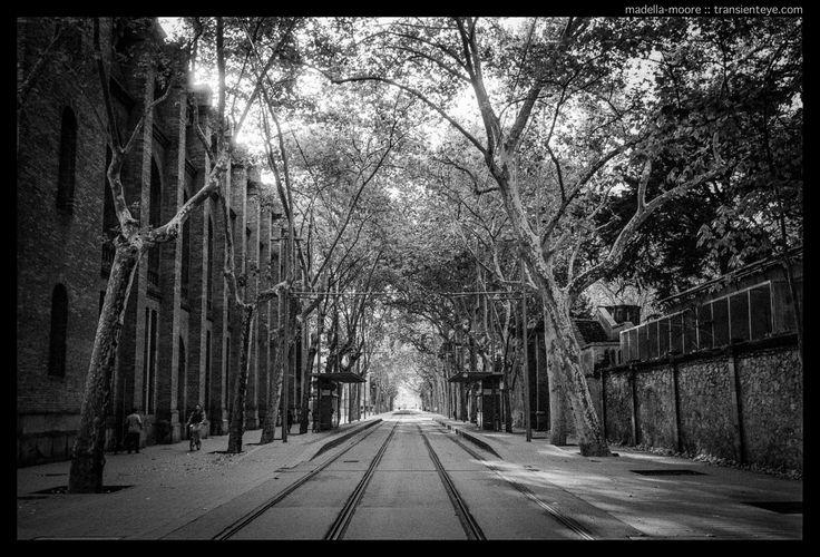 Tram lines alongside the Universitat Pompeu Fabra, Barcelona