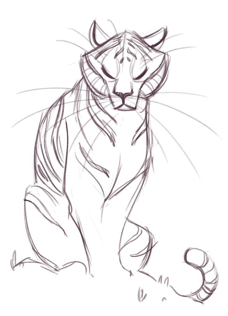 181: Tiger Sketch
