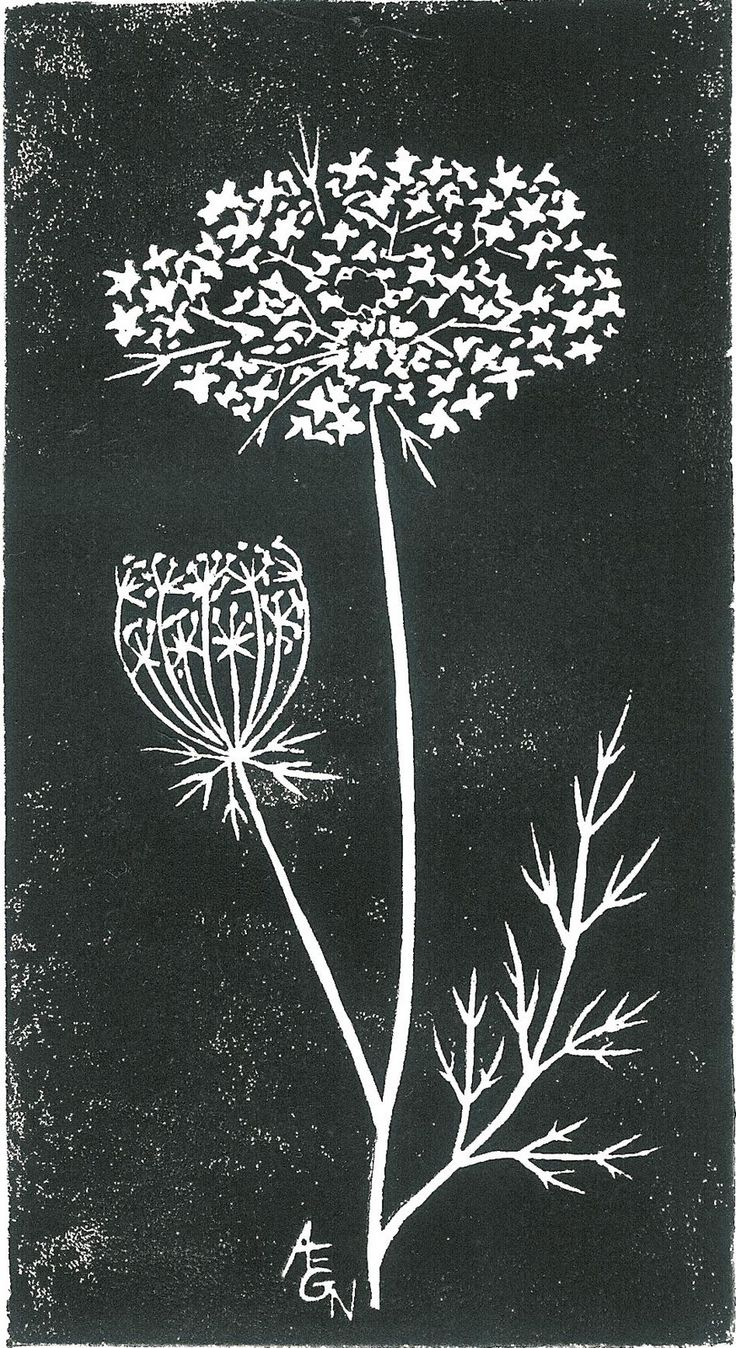 Black and White: Queen Anne's Lace