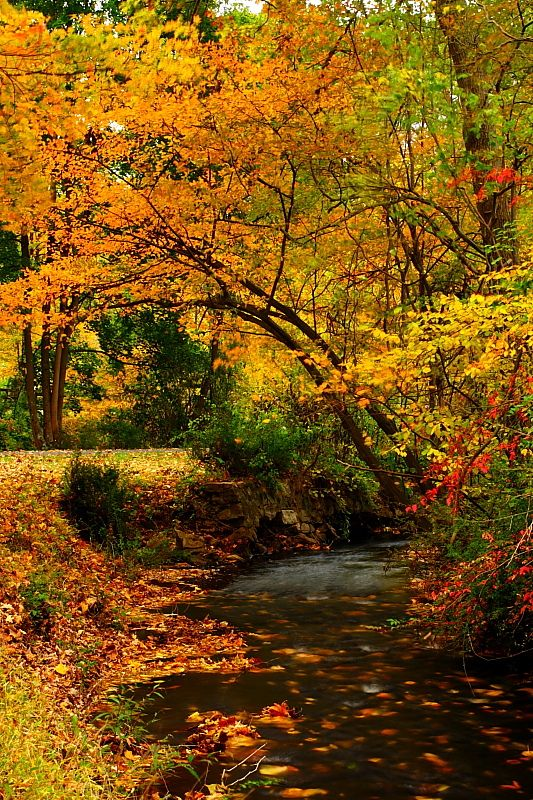 """Natirar Stream"" by YG Low on Flickr ~ This is a stream running through Natirar Park, New Jersey in the autumn."