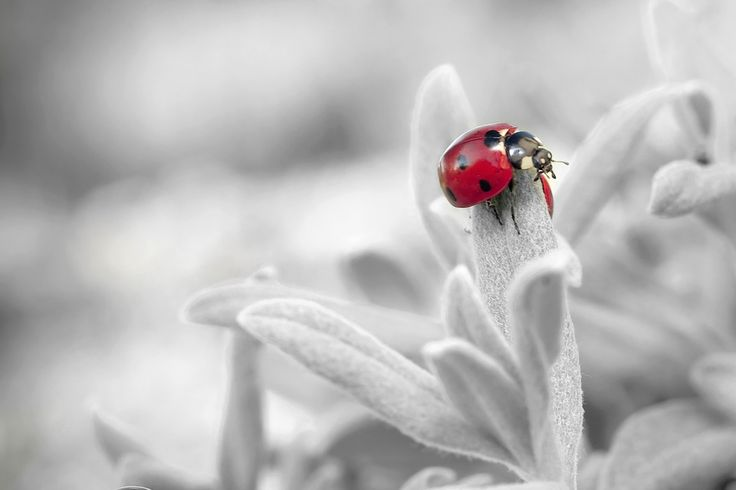 Ladybug 🐞 . . . #ladybug #ladybugs #naturelover #naturelove #naturelovers #natureshot #natureshots #naturehippys #naturel