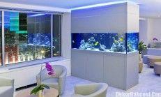 Wollen Sie Möglichst Viele Unterwassertiere Bewundern Und Einen  Authentischen Eindruck Gewinnen, Wie Sie Am Besten Ihr Eigenes Aquarium  Einrichten Können,.