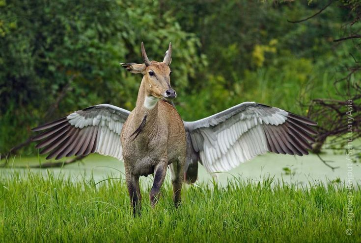 Nilgai and Sarus Crane caught at the perfect moment - Keoladeo National Park, Bharatpur. Image: Jagdeep Rajput/Sanctuary Awards 2012.
