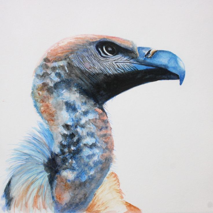 Water colour Bird painting Cape Griffin Vulture