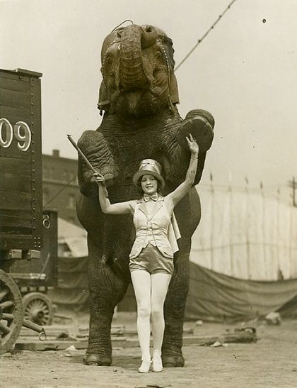 In Fern's circus the elephants were kept just past the horses and camels next to the carnie booths and before the third tier of camps - the gypsy camp.