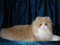 Cara Merawat Kucing Persia  http://caramerawatkucing1.blogspot.com/2012/10/cara-merawat-kucing-persia-kesayangan.html
