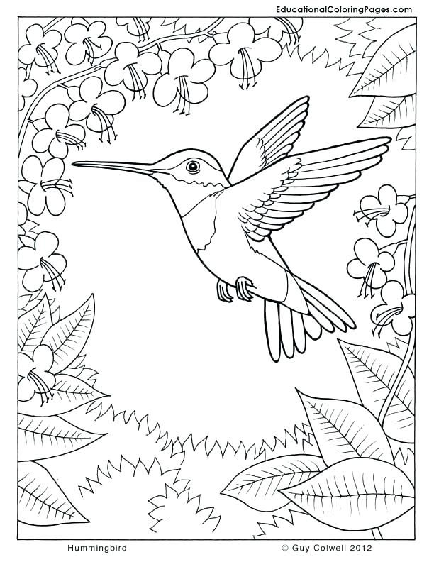 hummingbird coloring pages hummingbird coloring pages ...