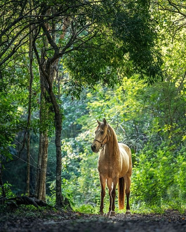 Pancho  ~ Looking right at home under a lush jungle canopy