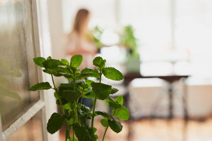 La recette antiparasite bio pour plantes
