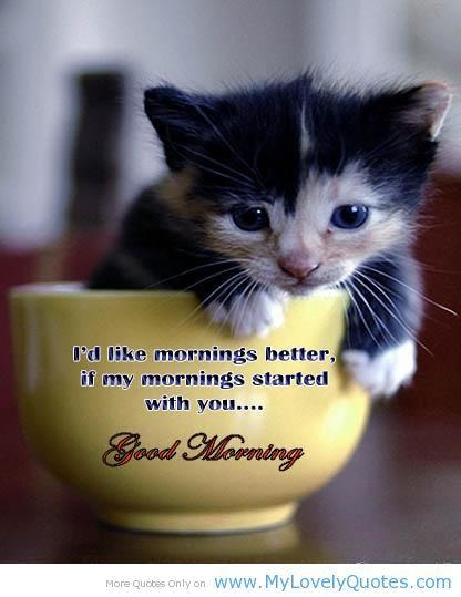Good Morning Everyone Cute : Best images about goodmorning on pinterest quotes