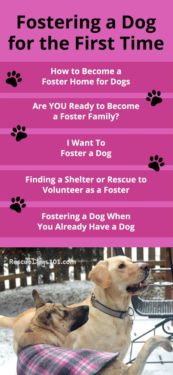 How To Foster A Dog Rescue Dogs Foster Dog Dog Care Tips