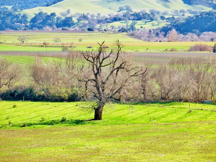 """Santa Ynez Valley"".......Taken Monday 19th January 2015....."