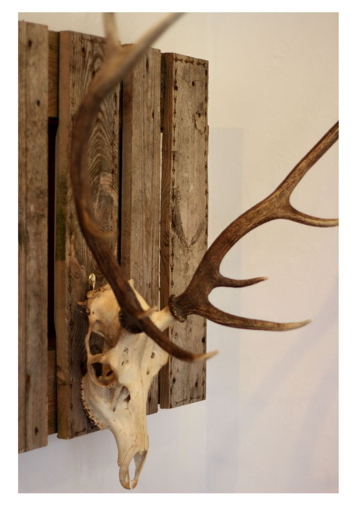 (c) SophieRoseIllustration (c) Rabbit&Rose  Red Deer skull with handmade mount
