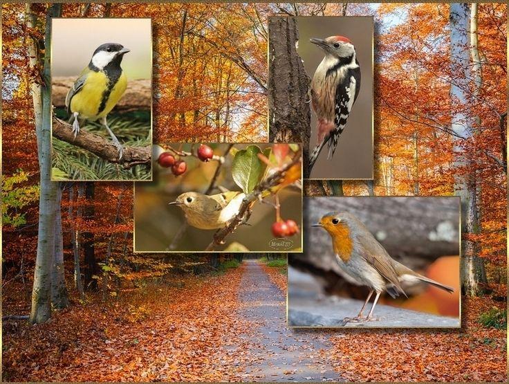 madarak ősszel