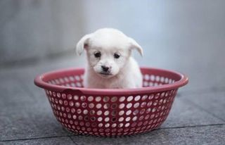 These companies give staff paid time off when they get a new puppy : UpliftingNews