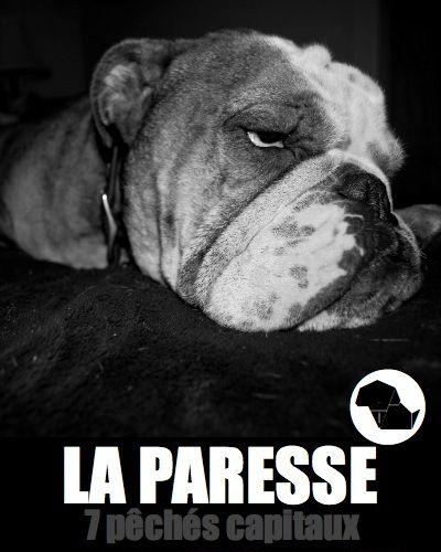 """Bouledogue anglais / English bulldog - LES 7 PÉCHÉS CAPITAUX VUS PAR BOXDOG - """"Parce que j'aime trop le confort du grand canapé de mes papas""""."""