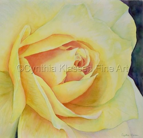 This watercolor painting, Yellow Rose, was painted by Cynthia Klassen. Prints are available from CynthiaKlassen.com