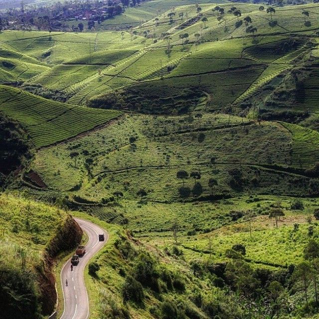 Cukul, Pangalengan. #letstravelindonesia #travelingindonesia Location: Pangalengan Sub-District, Bandung Regency, West Java, Indonesia. Great photo by @iuussssss Now Let's Travel Indonesia is available on Line Line ID: @letstravelindo (pakai @ ya :D)