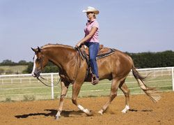 Be Brave at the Lope, Overcome Fear Does loping make you nervous? Do you wish it could be more fun and less nerve-racking? Follow our tips and learn to ease your anxieties.