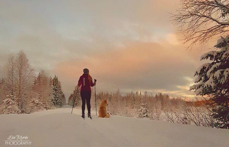 Cross-country skiing weekend #crosscountry #skiing #outdoors #winter  #winteriscoming #skitur #langrenn #längdåkning #örnsköldsvik #norrland #snow #landscape #lapphund #doglovers #skyline #polar #naturephotography