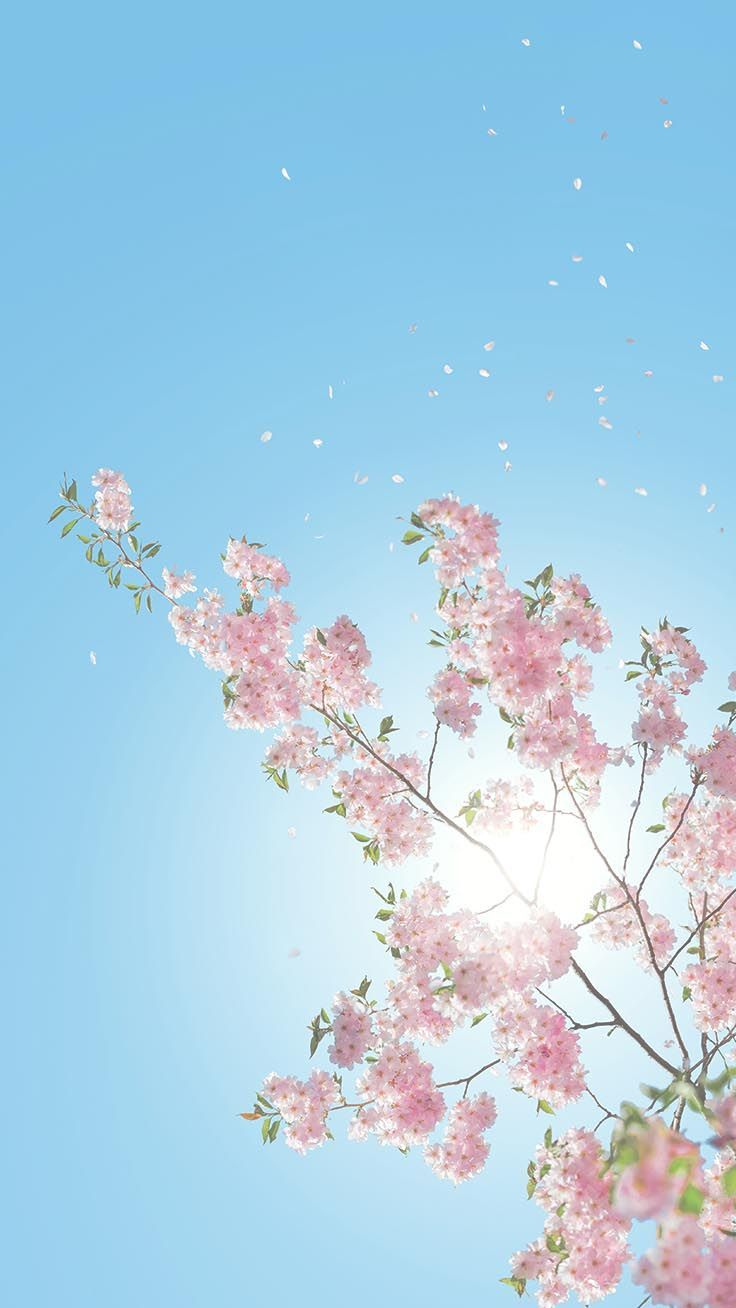 Spring Phone Wallpaper Flowers In 2020 Cherry Blossom Wallpaper Iphone Wallpaper Preppy Preppy Wallpaper