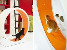 CatWheel Lets Indoor Cats Exercise in Style! Now Available in the US!