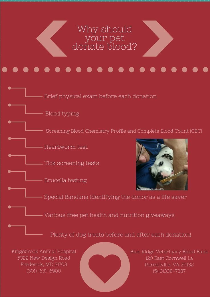 Why should your pet donate blood? Because of all the perks! #AnimalHospital #Veterinarian #Pets #KAH #FrederickMaryland #KingsbrookAnimalHospital #Vet #BloodDonation #CanineBloodDoners #CanineHeroes #BlueRidge #BloodBank