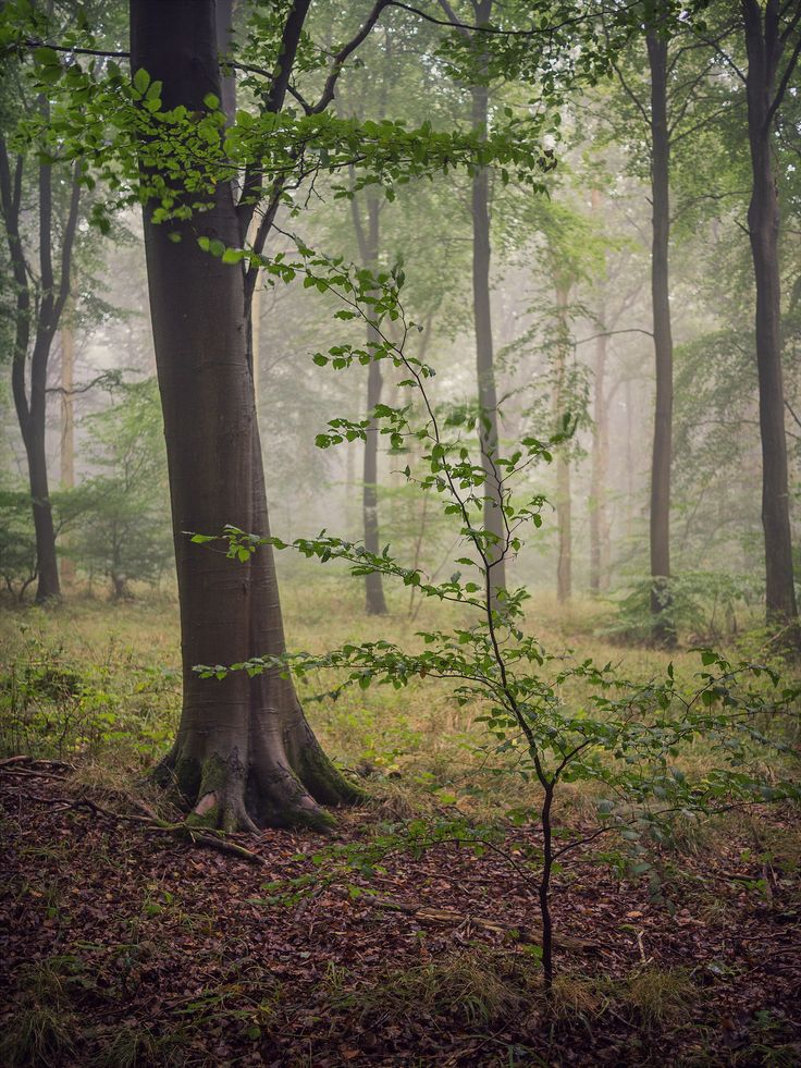 https://flic.kr/p/MSjoRa   Little & Large   Wendover Woods, Buckinghamshire.  My new website went live at the weekend, if anyone fancies taking a look. Any feed back would be much appreciated.  www.damianwardphotography.co.uk   website    twitter    500px   behance   vsco