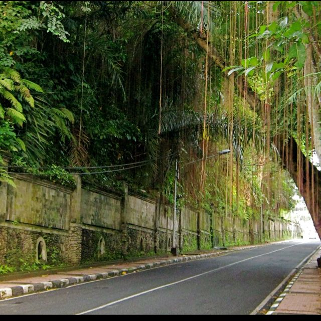 Campuan road- Ubud, Bali....goodnes knows how many times we walked this...LOVE the banyans