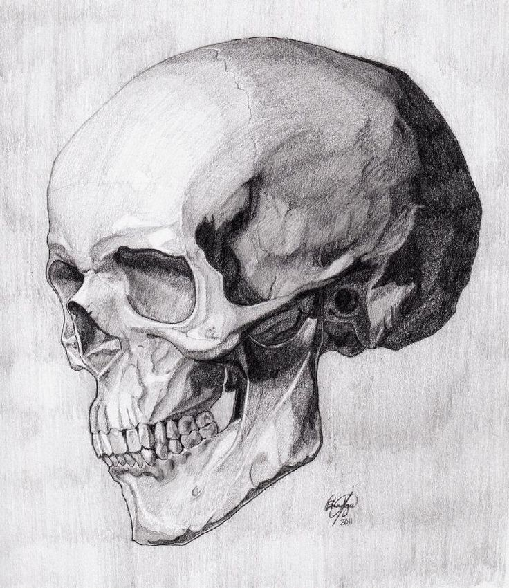 25+ best ideas about Skull drawings on Pinterest | Awesome ...