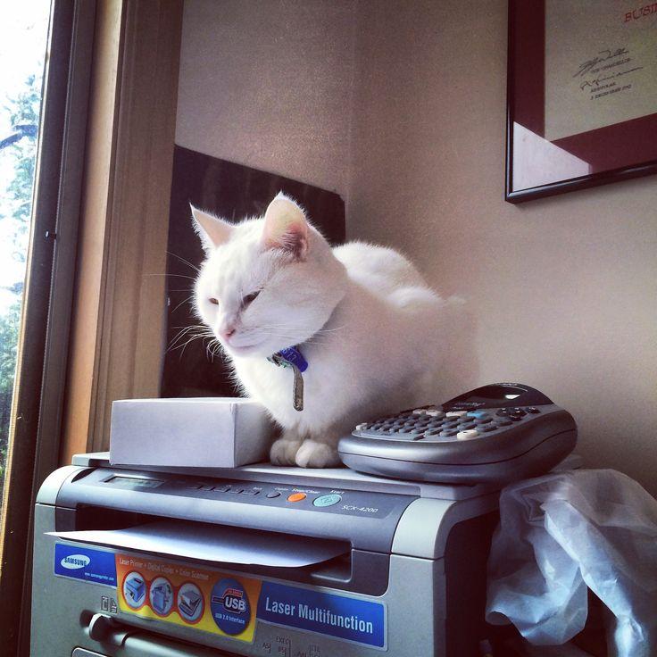 My work companion #cats #catlovers #cutecats