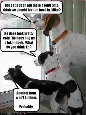 funny dog pics with captions | ... and Cute Animals: funny cat photos with captions- funny cat photos #dogsfunnypics #funnydogs