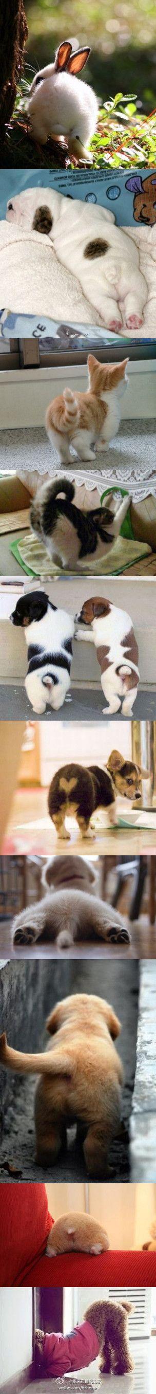 Cute little bums!