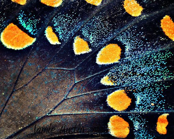 Butterfly Wings 8x10 Fine Art Photograph  by SpringHouseCreations, $25.00