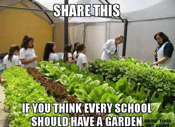 Gardening Ideas For Schools mshs donates raised bed garden kits to schools and community groups Every School Should Have A Garden