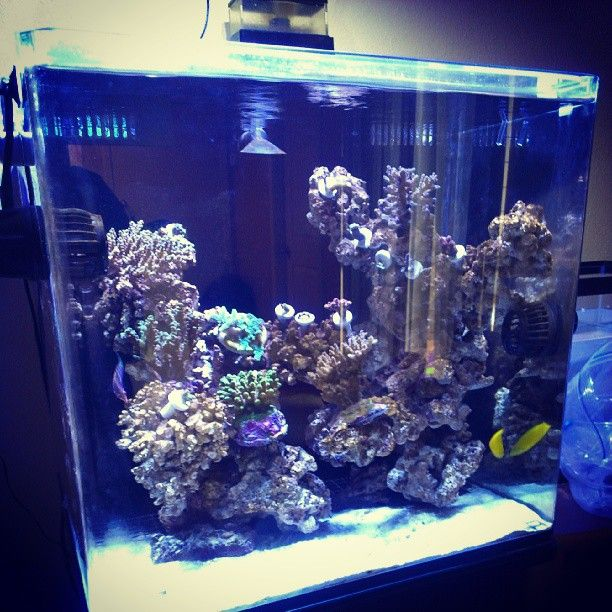 17 Best Images About Project Fish Tank On Pinterest: 17 Best Images About My Virtual Saltwater Fishtank On
