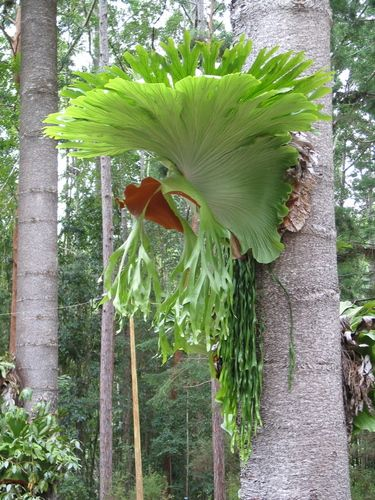 staghorn fern... This one is way cooler than the one in our yard!