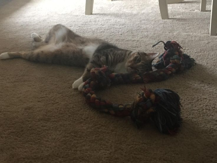 My cat Broop stealing the dog toy to take a nap. http://ift.tt/2ucWMOp