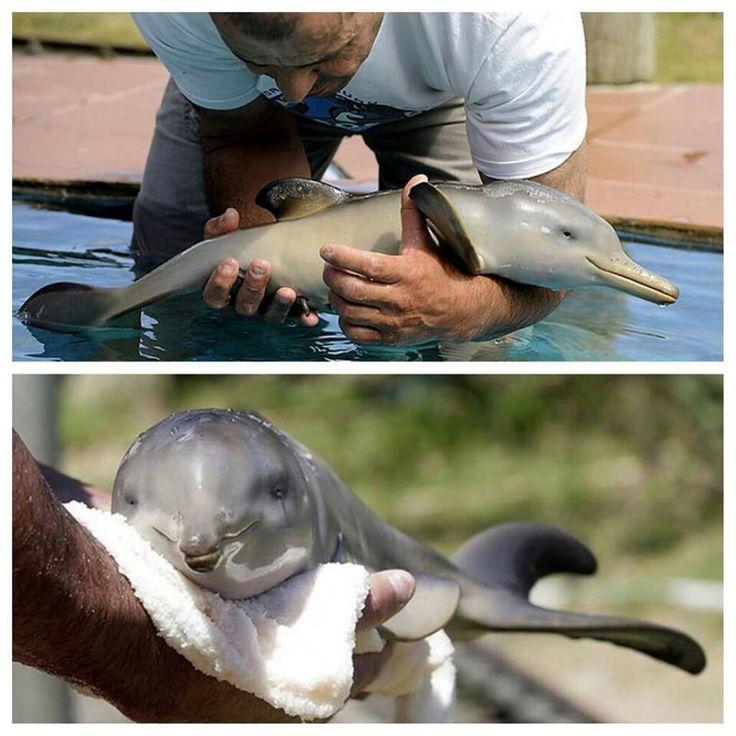 AHHH! Wittle baby dolphin!