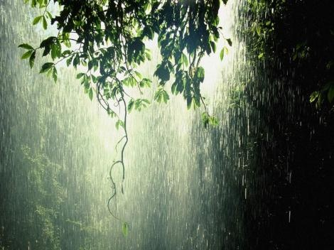 Rain in the forest.: Nature, Rainy, Raindrop, Rain Forests, Things, Beautiful Rain, Photography, Rain Rain, Rainforests