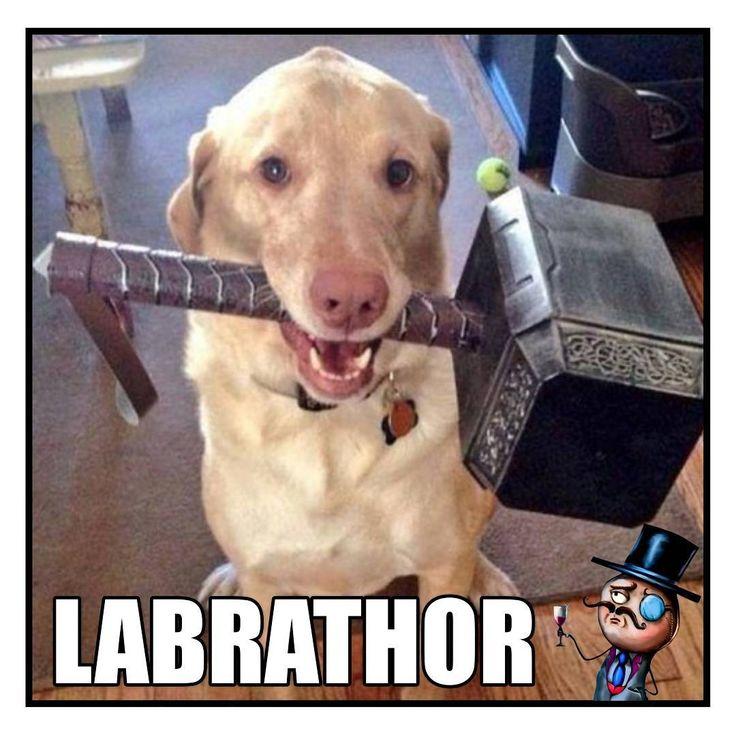 c299e3762b8630a572ee57a4dfe0afe5 funny animal memes dog memes best 25 macho alfa meme ideas on pinterest pokemon alfa, jessie,Macho Alfa Meme